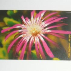 Cartela - Flora - Floare - Turcia - 2+1 gratis toate licitatiile - CHA126 - Cartela telefonica straina