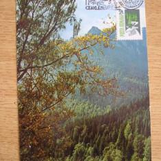 MAXIMA - TURISM - MASIVUL CEAHLAU - SARBATOAREA MUNTELUI - CEAHLAU 1987, Romania de la 1950, Natura