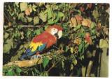 Carte postala(ilustrata)-GRADINA ZOOLOGICA BUCURESTI-Papagal Ara, Necirculata, Printata