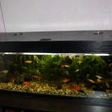 acvariu populat