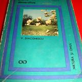 Plante decorative - V. Diaconescu