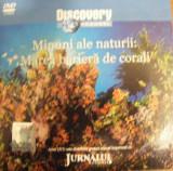 DVD DISCOVERY MAREA BARIERA DE CORALI