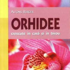 ORHIDEE CRESCUTE IN CASA SI IN BIROU de ALFONS BURGER - Carte gradinarit mast