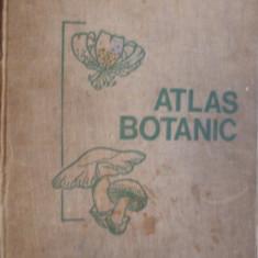 ATLAS BOTANIC  -  L. Popovici, C. Moruzi, I. Toma -- [ 1973,  215 p ], Alta editura