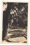 Carte postala(marca fixa)-SNAGOV -parcul