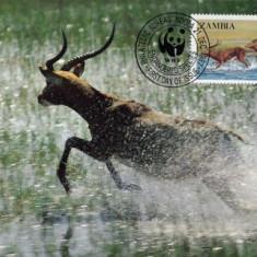 WWF set complet / 4 buc./ MC 1987 Zambia - Antilopa