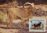 WWF set complet MC /4buc. div./ Chad 1988 - berber sheep