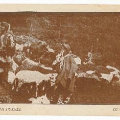 551 - Bucovina, Suceava, shepherds on the Mountain PUTNEI - old postcad unused - Carte Postala Bucovina 1904-1918, Necirculata, Printata