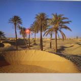 TUNISIA - OAZA IN DESERT - NECIRCULATA., Africa, Fotografie