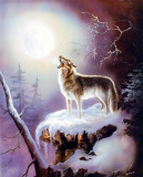 233.Poster - Wolf 40,64-50,08