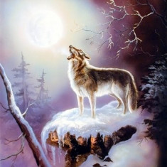 233.Poster - Wolf 40, 64-50, 08 - Afis