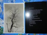 Matei Bajenaru - Nichita Stanescu - post card - Necuvintele - Cambridge