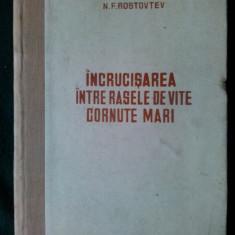 Incrucisarea intre rasele de vite Cornute mari - N.F. Rostovtev - 1951 - Carti Zootehnie