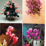 Flori, lot 4 bucati ilustrate postale circulate - Carte postala tematica