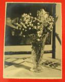 Fotografie Veche de Colectie pe Hartie Fotografica Agfa, Flori model 3, Marime 22,5 - 17 cm - anii 1930