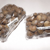 Seminte de palmieri