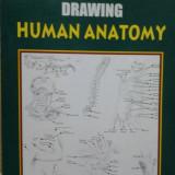ANATOMIE  ARTISTICA  ( lb. engleza) THE COMPLETE BOOK OF DRAWING HUMAN ANATOMY  de  KESHAW KUMAR, Alta editura