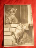 Fotografie- Ilustrata - Pisici , 1956 URSS ,tiraj 20 000 ex ( f.mic)