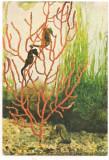 (A) carte postala(ilustrata)-PESTI-Calut de mare