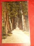 Ilustrata Ramnicu Valcea -Alee in Gradina Zavoi,circ. cu stamp. Ciineni Bucuresti,Ambulanta 16- Clasica