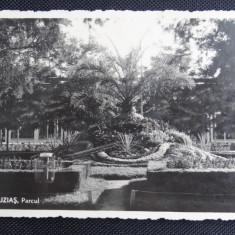 CP - Buzias, Parcul - Ilustratia Gherla