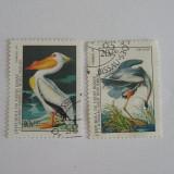 TS5B - GUINEEA