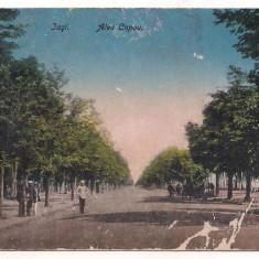 #carte postala(ilustrata)-IASI+Aleea Copou - Carte Postala Moldova dupa 1918, Printata