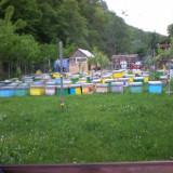 Vand 25 familii albine !