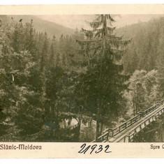 2449 - Bacau, SLANIC MOLDOVA, bridge - old postcard - unused, Necirculata, Printata
