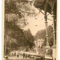 476 - Bacau, SLANIC MOLDOVA, park - old postcard  - used - 1952, Circulata, Printata