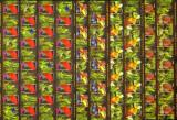 SD Romania 2005 LP1676c- Pesti exotici, 6 val.coli de 20 timbre+20 viniete, MNH, Nestampilat
