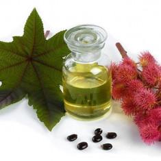 Ulei de Ricin Organic (Ricinus Communis BIO), 1 Kg - Ulei relaxare