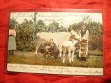 Ilustrata sf.sec.XIX Salutari din Romania -2 femei in costum popular mulg vaca