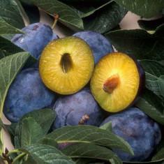 Vand tuica de prune, anul de producere 2013