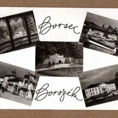 BORSEC HARGHITA 1963