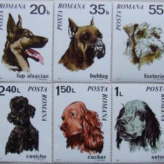 TIMBRE ROMANIA 1971 - CAINI DE RASA  6 VALORI, NEOBLITERATE - E0975 V