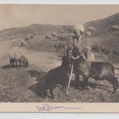 B76495 Romania Port Popular Cioban la oi 1900
