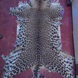 blana de leopard si piele de sarpe 3.5 m lungime