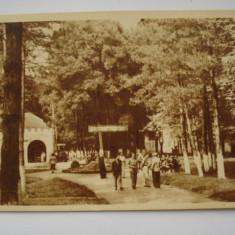 Carte postala (Vedere ) LIPOVA - Vedere din parc