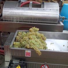 Vin alb demisec, Romania