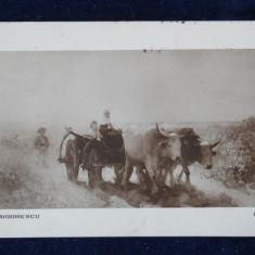 Vedere-Pictura-Reproduceri-Grigorescu - Car cu boi 18 cenzurat Blaj fara timbru