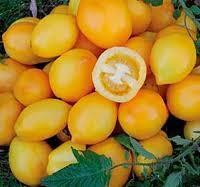 """Seminte rosii """" Lemon Plum """" foto"""