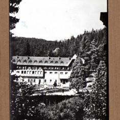 BORSEC HARGHITA 1964