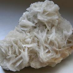 Specimen minerale - BARITINA - Fosila roca