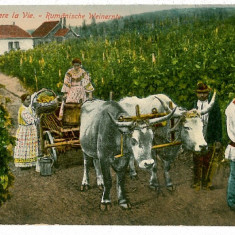 1133 - ETHNIC, vintage, struguri la teasc - old postcard, CENSOR - used - 1918 - Carte postala tematica, Circulata, Printata