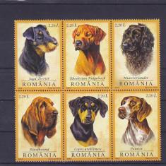 Caini de vanatoare    ,nr lista 1694 ,Romania.