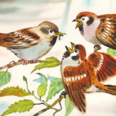 Fauna - Pasari - Vrabie de casa - Carte postala tematica