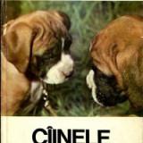 Coriolan Neamtu - Ciinele, prietenul nostru. ABC canin