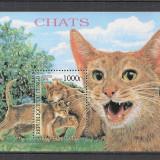 Congo (Brazzaville).1999 Rase de pisici-Bl. MC.234 - Timbre straine