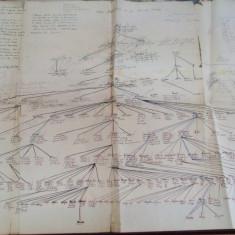 Manuscris semnat Ion Tanoviceanu cu adnotari G. Florescu Arborele genealogic al Familiei Catargi - Autograf